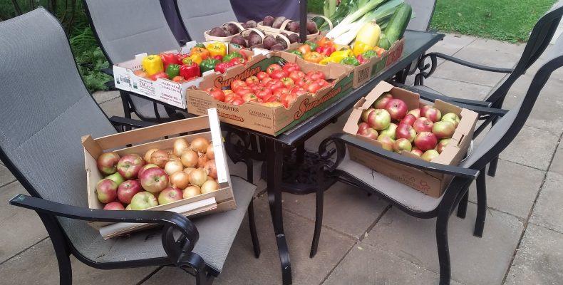Distribution de légumes du 19 septembre 2016 à Victoriaville