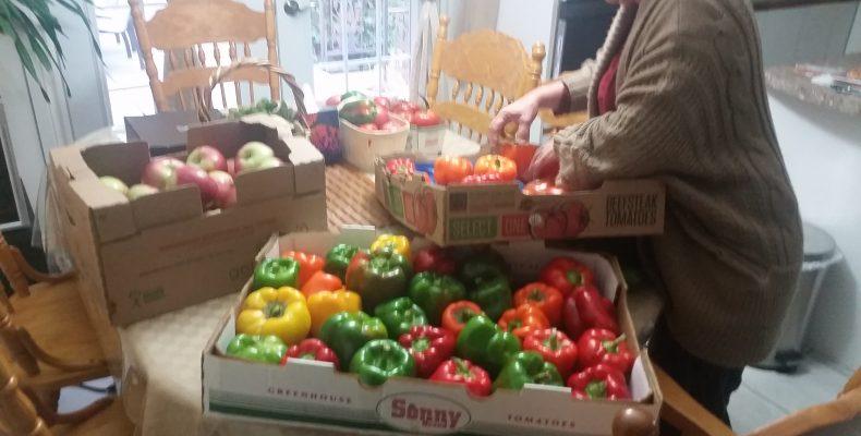Panoplie de légumes prêt à être distribués.