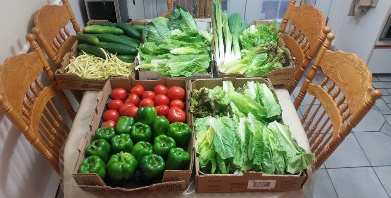 Distribution de légumes comportant divers légumes comme les concombres, les fèves, la laitue et bien d'autres légumes.