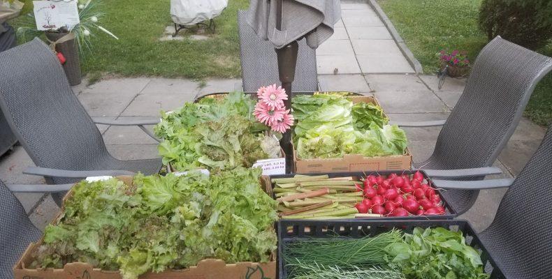 Distributions de légumes du 18 juillet 2018 par Les Jardins du Coeur