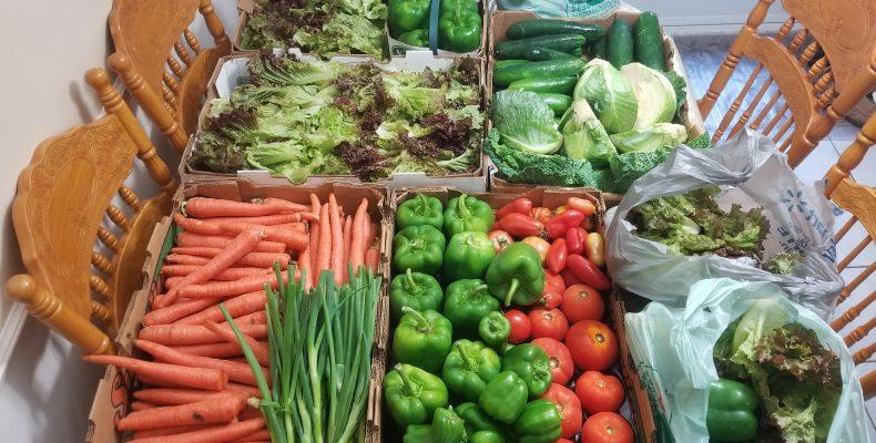 Les Jardins du Coeur : Légumes distribués le 14 septembre 2018
