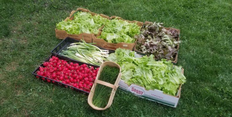 Distribution de légumes le 12 juin 2020 par l'organisme Les Jardins du Coeur