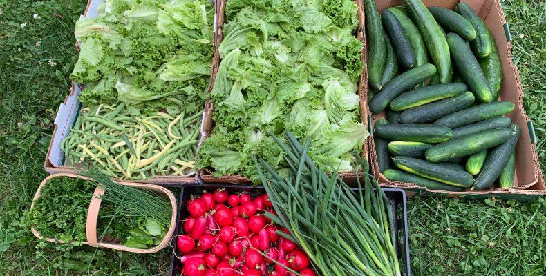 Légumes de la distribution du 20 juillet 2020
