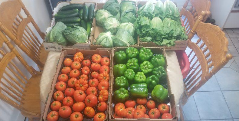 Image des légumes distribués du 21 août 2020